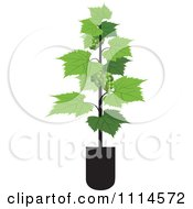 Clipart Potted Grape Vine Royalty Free Vector Illustration