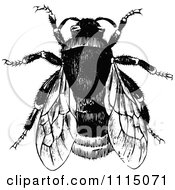 Clipart Vintage Black And White Bumble Bee 1 Royalty Free Vector Illustration by Prawny Vintage