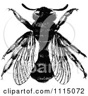 Clipart Vintage Black And White Bumble Bee 2 Royalty Free Vector Illustration by Prawny Vintage