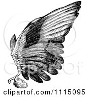 Clipart Vintage Black And White Bird Wing Royalty Free Vector Illustration by Prawny Vintage