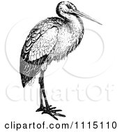 Vintage Black And White Stork Bird