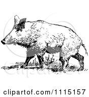 Clipart Vintage Black And White Wild Hog Royalty Free Vector Illustration