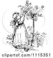 Clipart Vintage Black And White Girl Picking Flowers From A Shrub 2 Royalty Free Vector Illustration
