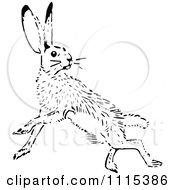 Clipart Vintage Black And White Jack Rabbit Royalty Free Vector Illustration
