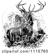 Clipart Retro Vintage Black And White Stag Buck Deer With Antlers 1 Royalty Free Vector Illustration