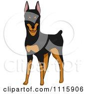Cute Doberman Pinscher Dog