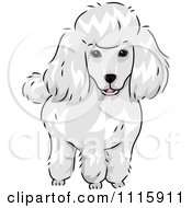 Clipart Cute White Poodle Dog Royalty Free Vector Illustration by BNP Design Studio