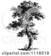 Clipart Retro Vintage Black And White Tree 7 Royalty Free Vector Illustration by Prawny Vintage #COLLC1116019-0178