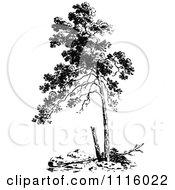 Retro Vintage Black And White Tree 1