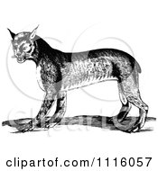 Clipart Retro Vintage Black And White Bobcat Royalty Free Vector Illustration by Prawny Vintage