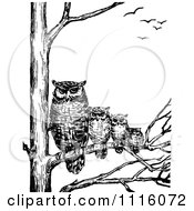 Retro Vintage Black And White Family Of Owls In A Tree
