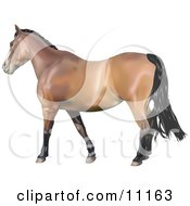 Brown Horse With A Black Mane Clipart Illustration
