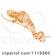 Orange And White Chameleon Lizard
