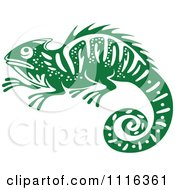 Green And White Chameleon Lizard