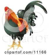 Black Red And Orange Cock Chicken Rooster Bird by AtStockIllustration
