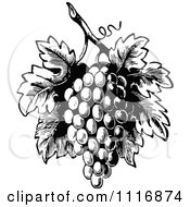 Clipart Of A Retro Vintage Black And White Bunch Of Grapes With Leaves 1 Royalty Free Vector Illustration