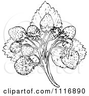 Clipart Of A Retro Vintage Black And White Strawberries And Leaves Royalty Free Vector Illustration