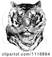 Clipart Of A Retro Vintage Black And White Tiger Face Royalty Free Vector Illustration