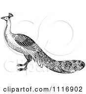 Clipart Of A Retro Vintage Black And White Peacock Royalty Free Vector Illustration by Prawny Vintage
