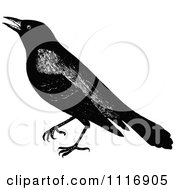 Clipart Of A Retro Vintage Black And White Crow Royalty Free Vector Illustration