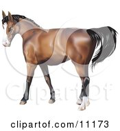Brown Horse With A Black Mane by AtStockIllustration
