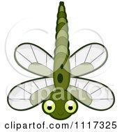 Cute Green Dragonfly