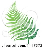 Clipart Of A Green Fern Branch 2 Royalty Free Vector Illustration