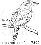 Clipart Of A Black And White Perched Kookaburra Bird Royalty Free Vector Illustration