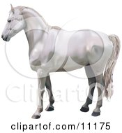 A Beautiful White Horse In Profile Clipart Illustration