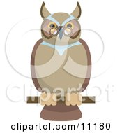 Old Wise Owl Wearing Glasses Perched On A Branch