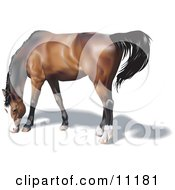 Brown Horse With A Black Mane Grazing Clipart Illustration