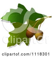 Clipart Of Acorns And Oak Leaves Royalty Free Vector Illustration