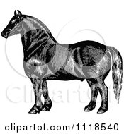 Clipart Of A Retro Vintage Black And White Horse 3 Royalty Free Vector Illustration by Prawny Vintage