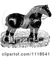 Clipart Of A Retro Vintage Black And White Horse 4 Royalty Free Vector Illustration by Prawny Vintage