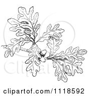 Clipart Of A Retro Vintage Black And White Oak Branch With Leaves And Acorns Royalty Free Vector Illustration by Prawny Vintage