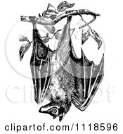 Clipart Of A Retro Vintage Black And White Wild Bat Hanging From A Tree Royalty Free Vector Illustration
