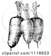 Clipart Of A Retro Vintage Black And White Plump Carrots And Greens Royalty Free Vector Illustration by Prawny Vintage