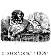 Clipart Of A Retro Vintage Black And White St Bernard Dog Royalty Free Vector Illustration
