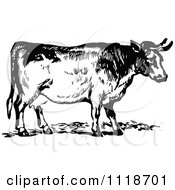 Clipart Of A Retro Vintage Black And White Cow 2 Royalty Free Vector Illustration