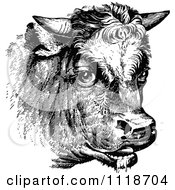Clipart Of A Retro Vintage Black And White Cow Portrait 1 Royalty Free Vector Illustration by Prawny Vintage