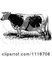 Clipart Of A Retro Vintage Black And White Cow 1 Royalty Free Vector Illustration