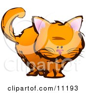 Orange Kitten Staring Clipart Illustration