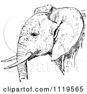 Clipart Of A Retro Vintage Black And White African Elephant Royalty Free Vector Illustration by Prawny Vintage