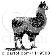 Clipart Of A Retro Vintage Black And White Alpaca Royalty Free Vector Illustration