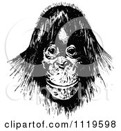 Clipart Of A Retro Vintage Black And White Orangutan Royalty Free Vector Illustration by Prawny Vintage