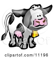 Black And White Cow With Udders And A Cow Bell On A Dairy Farm