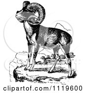 Clipart Of Retro Vintage Black And White Wild Goats Royalty Free Vector Illustration by Prawny Vintage
