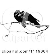 Clipart Of Retro Vintage Black And White Crows On A Branch Royalty Free Vector Illustration