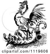 Clipart Of A Retro Vintage Black And White Rooster Attacking A Fox Royalty Free Vector Illustration by Prawny Vintage