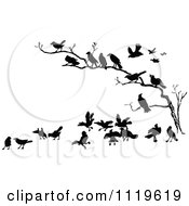 Clipart Of Retro Vintage Black And White Crows In A Bare Tree Royalty Free Vector Illustration